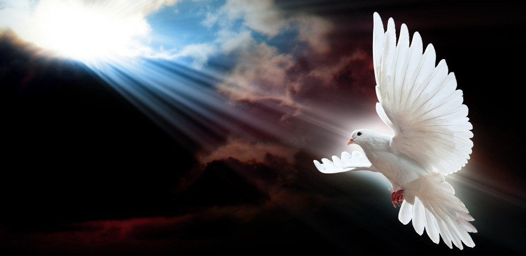 MOTL dove-sun-rays